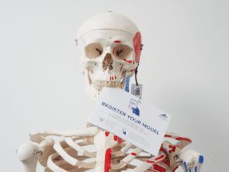 Anatomisches Modell mit Smart-Label inkl. integrierter NFC-Technologie