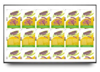 Mit der neuen LiveWebView bzw. LiveSheet-Funktion der Print- bzw. CartonStar Inspektions-systeme können Bediener den Druckprozess an präzisen Live-Bildern, jetzt noch genauer beobachten (Quelle: Isra Vision)